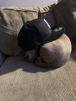 Chihuahua Puppies for sale in 733 Wedgewood Dr, Pittsburg, CA 94565, USA. price: NA