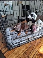 Chihuahua Puppies for sale in 9674 NW 10th Ave, Miami, FL 33150, USA. price: NA