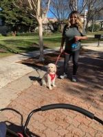 Cockapoo Puppies for sale in Union City, CA, USA. price: NA