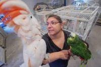 Cockatiel Birds for sale in Tampa, FL, USA. price: NA