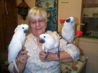 Cockatiel Birds for sale in Las Vegas, NV, USA. price: NA