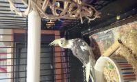 Cockatiel Birds for sale in Vine Grove, KY 40175, USA. price: NA