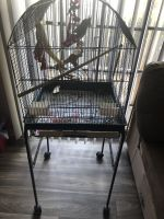 Cockatiel Birds for sale in 4990 Old Spartanburg Rd, Taylors, SC 29687, USA. price: NA