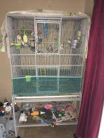 Cockatiel Birds for sale in Ocala, FL, USA. price: NA