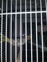 Cockatiel Birds for sale in Lynchburg, VA 24501, USA. price: NA