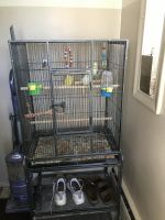 Cockatiel Birds for sale in Enfield, CT 06082, USA. price: NA
