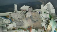 Conure Birds for sale in Needville, TX 77461, USA. price: NA