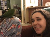 Conure Birds for sale in Venice, FL, USA. price: NA