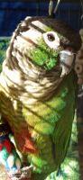 Conure Birds for sale in Columbia, TN 38401, USA. price: NA