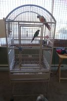Conure Birds for sale in Camp Hill, PA 17011, USA. price: NA