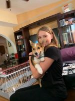 Corgi Puppies for sale in St. Petersburg, FL, USA. price: NA