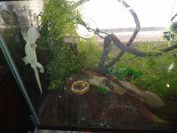 Crested Gecko Reptiles for sale in Bradenton, FL, USA. price: NA