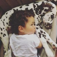 Dalmatian Puppies for sale in Pennsylvania Ave, Los Angeles, CA 90033, USA. price: NA