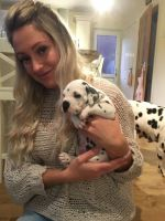 Dalmatian Puppies for sale in Philadelphia, IL 62691, USA. price: NA