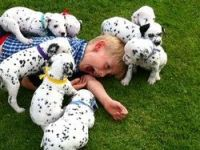 Dalmatian Puppies for sale in Jersey City, NJ, USA. price: NA