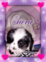 Dalmatian Puppies for sale in Sherrodsville, OH 44675, USA. price: NA
