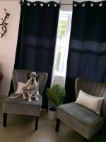 Dalmatian Puppies for sale in Naples, FL, USA. price: NA