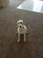 Dalmatian Puppies for sale in Carthage, MO 64836, USA. price: NA