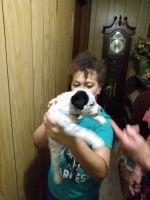 Dalmatian Puppies for sale in Quitman, GA 31643, USA. price: NA