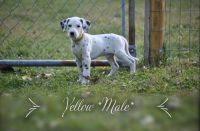 Dalmatian Puppies for sale in Indianapolis, IN, USA. price: NA