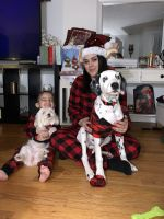 Dalmatian Puppies for sale in Manchester, CT 06042, USA. price: NA