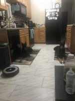 Doberman Pinscher Puppies for sale in Jacksonville, FL, USA. price: NA