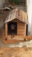 Doberman Pinscher Puppies for sale in Kent, WA, USA. price: NA