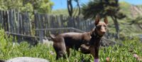 Doberman Pinscher Puppies for sale in Ontario, CA, USA. price: NA