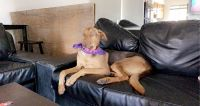 Doberman Pinscher Puppies for sale in Temecula, CA, USA. price: NA