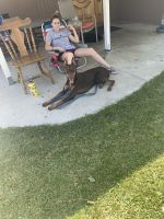 Doberman Pinscher Puppies for sale in Riverside, CA 92509, USA. price: NA