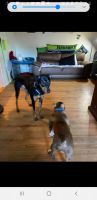Doberman Pinscher Puppies for sale in 7637 Pacific Ave, Tacoma, WA 98408, USA. price: NA
