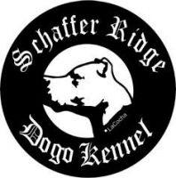 Dogo Guatemalteco Puppies for sale in Columbia, SC, USA. price: NA