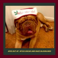 Dogue De Bordeaux Puppies for sale in Biloxi, MS, USA. price: NA