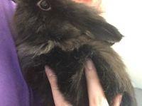 Domestic rabbit Rabbits for sale in 2210 2nd Ave, Toms River, NJ 08753, USA. price: NA