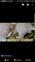 Don Sphynx Cats for sale in Temecula, CA, USA. price: NA