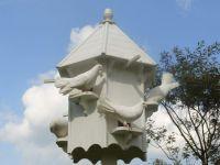 Dove Birds for sale in California, MD, USA. price: NA
