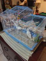 Dove Birds for sale in Culpeper, VA 22701, USA. price: NA