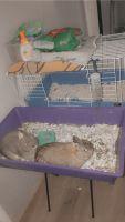 Dwarf Rabbit Rabbits for sale in Omaha, NE, USA. price: NA