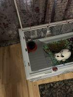 Dwarf Rabbit Rabbits for sale in Arlington, TX 76006, USA. price: NA