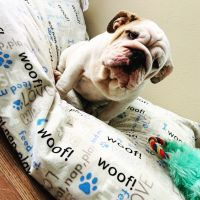English Bulldog Puppies for sale in Grand Prairie, TX, USA. price: NA