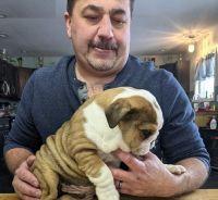 English Bulldog Puppies for sale in Salt Lake City, UT, USA. price: NA