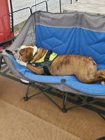 English Bulldog Puppies for sale in Ten Mile, TN 37880, USA. price: NA