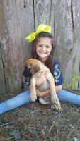 English Mastiff Puppies for sale in Apalachicola, FL 32320, USA. price: NA