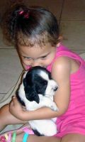 English Springer Spaniel Puppies for sale in Texas, USA. price: NA