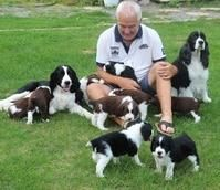 English Springer Spaniel Puppies for sale in Boise, ID, USA. price: NA