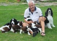 English Springer Spaniel Puppies for sale in Tinley Park, IL, USA. price: NA