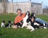 English Springer Spaniel Puppies for sale in Bowie, MD, USA. price: NA