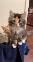 Farm Cat Cats Photos