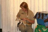 Fennec Fox Animals for sale in VT-100, Londonderry, VT 05148, USA. price: NA