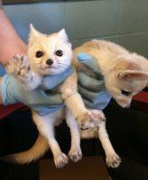 Fennec Fox Animals for sale in Alabama Ave SE, Washington, DC, USA. price: NA